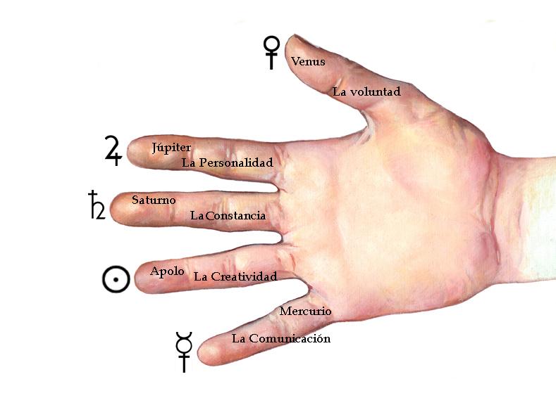 Worksheet. Los montes de los dedos de la mano y su cualidad  Quiromancia